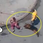 Foi Jogar pedra no cachorro e se deu mal