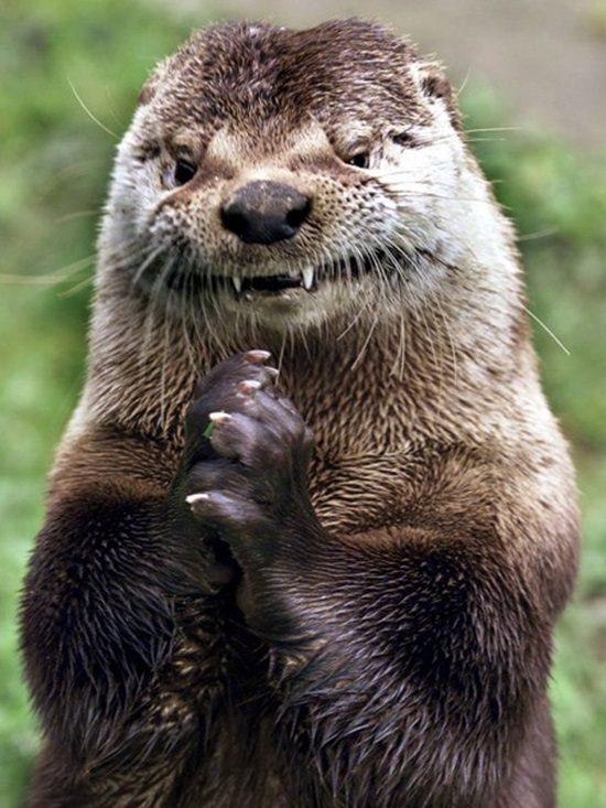 20-animais-que-estão-prestes-a-elaborar-um-plano-maligno-Blog-Animal-1