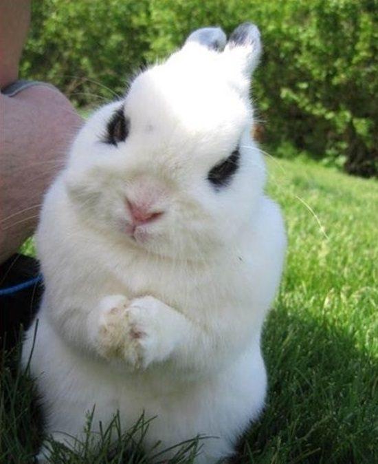 20-animais-que-estão-prestes-a-elaborar-um-plano-maligno-Blog-Animal-10