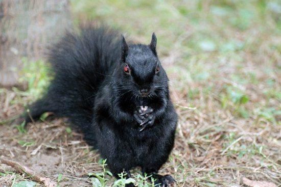20-animais-que-estão-prestes-a-elaborar-um-plano-maligno-Blog-Animal-11