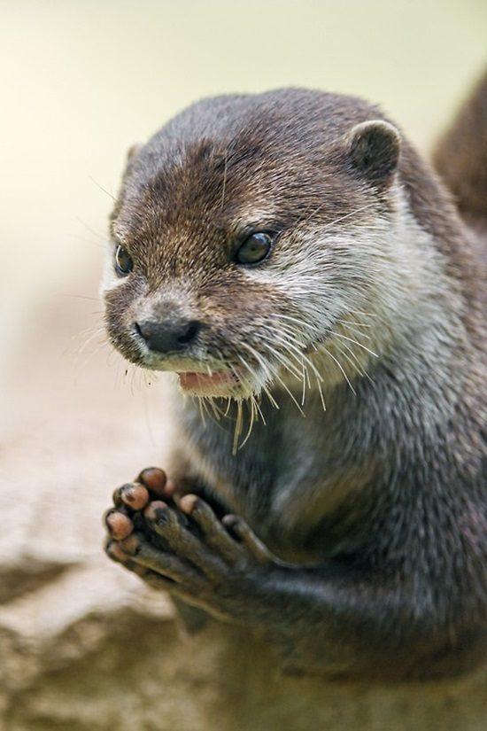 20-animais-que-estão-prestes-a-elaborar-um-plano-maligno-Blog-Animal-19