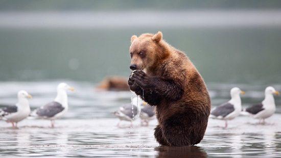 20-animais-que-estão-prestes-a-elaborar-um-plano-maligno-Blog-Animal-6