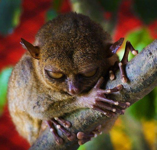 20-animais-que-estão-prestes-a-elaborar-um-plano-maligno-Blog-Animal-9