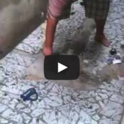 Tutorial do dia: Como pescar um rato no quintal de casa!