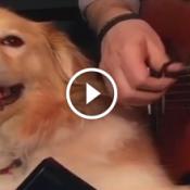Sincronismo perfeito entre homem e cachorro