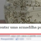 Uma armadilha bem incomum contra o mosquito da dengue