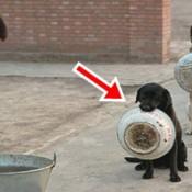Cães policiais aguardando o almoço na China