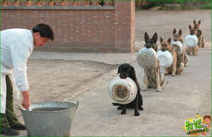 Cães policiais aguardando almoço na China