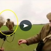Dono de falcão estava mostrando seu mascote na TV quando de repente…