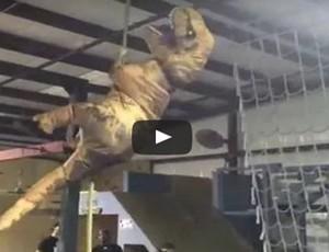 treinamento de dinossauro