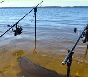 O peixe que não respeita as regras da pescaria face