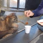 A reação de um macaco ao ver um truque de mágica