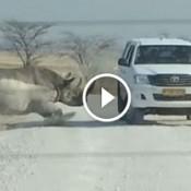 Vídeo impressionante mostra o momento exato em que rinoceronte ataca um carro