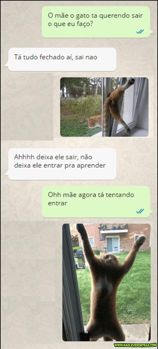 gatinho_esperto