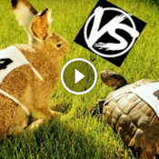 Finalmente fizeram a corrida entre a lebre e a tartaruga