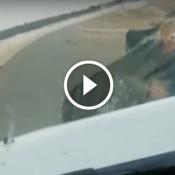 Quando um hipopótamo enfurecido resolve atacar seu carro