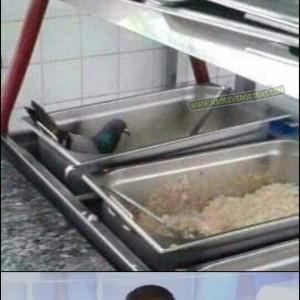 pombo grejado