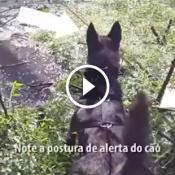 Cão policial fareja e encontra criminosos escondido no pântano