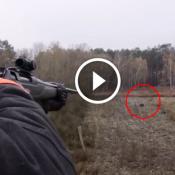 Caça ao javali com rifle 404