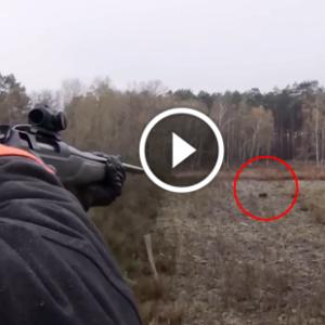 caçada ao javali com rifle