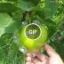 frutas com formatos