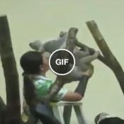 Ajudadora de trepada de coala