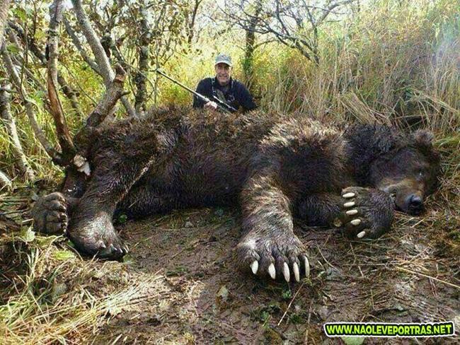 urso grande 2