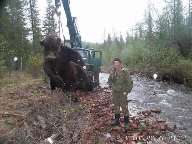 urso grande 3