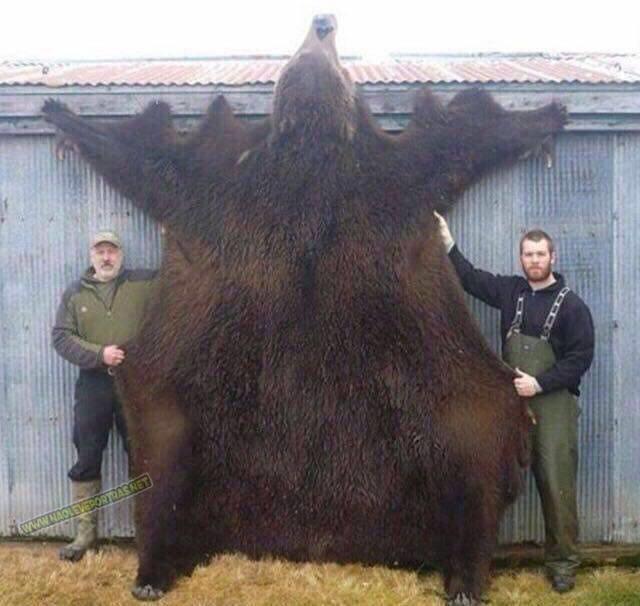 urso grande 5