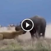 Depois de assistir este vídeo, você vai repensar sobre quem realmente é o rei dá selva