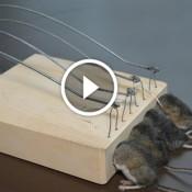 Guilhotina para ratos, é a coisa mais sinistra que você verá hoje!