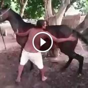 Como que eu sei se minha égua tá no cio?