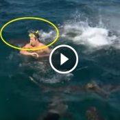 O apresentador que mostrou na prática, que não se deve nadar junto com tubarões!