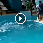 Campeonato Mundial de briga de piscina na Rússia