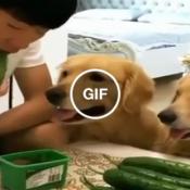 Como enganar seu cachorro que quer tudo o que você está comendo