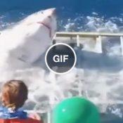 Eis que você coloca sua sogra na jaula, e cerra as barras laterais para o tubarão entrar