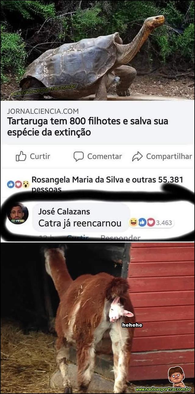Catraruga