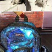 Quarentão por uma mochila que mal serve no gato
