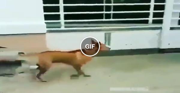 Romildo, o cachorro que só entreta quando está do lado de dentro
