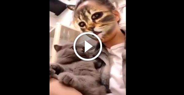Bugo o sistema operacional do gato