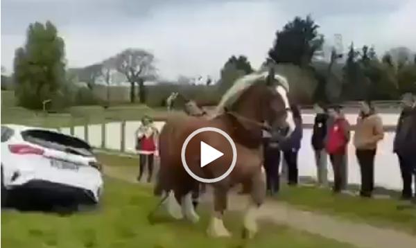 Um cavalo de potência